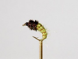 Jindabyne Cased Caddis