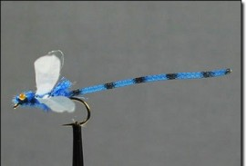 Blue and Olive  Adult Damsel