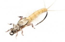 Mayfly Nymph Realistic